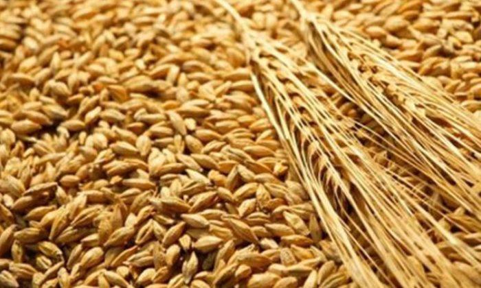 Buğdayın Göze ve Kalbe Faydası Nelerdir?