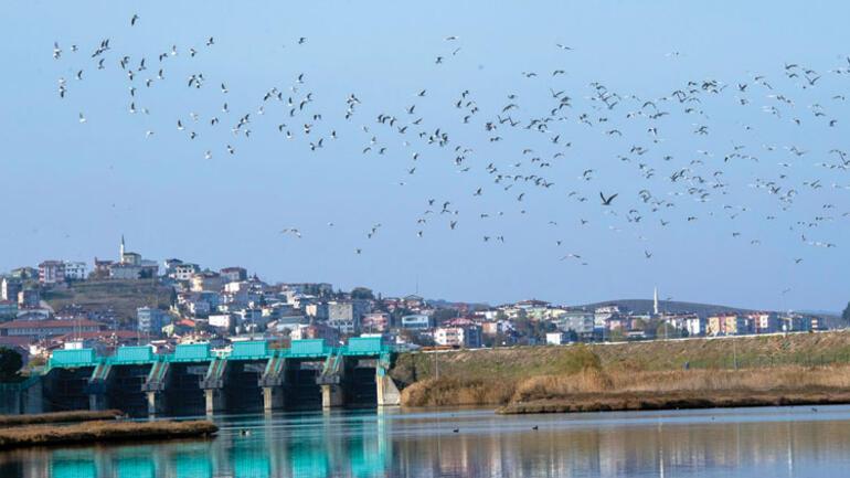İstanbul bir flamingo şehri oluyor