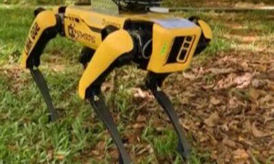 Singapur'da koronavirüse karşı robot köpekler kullanılıyor