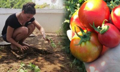 Özge de organik tarıma başladı… Sebzeyi, meyveyi dalından koparıp yemek gibisi yok!