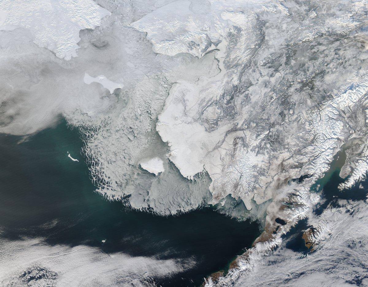 Bilim insanlarından kritik uyarı: Bering Denizi son 5 bin 500 yılın en düşük seviyesinde #1