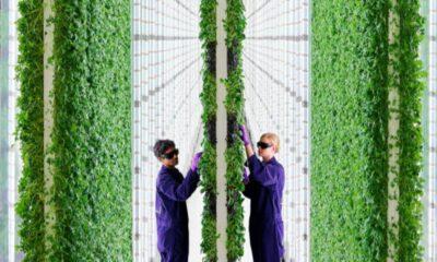 Arazi sorununu çözmek için yeni yöntem: Yapay zekalı dikey çiftlikler