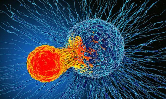 Kanser hücrelerinin kemoterapiden kurtulmak için yavaşladığı tespit edildi