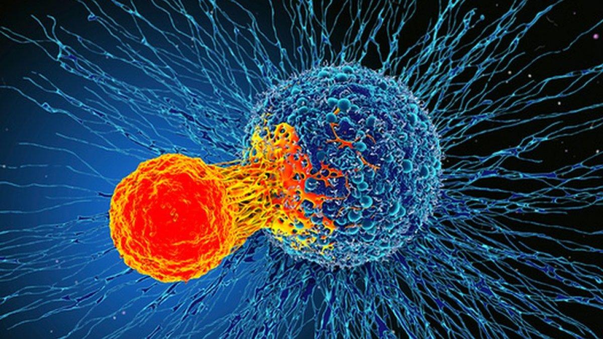 Kanser hücrelerinin kemoterapiden kurtulmak için yavaşladığı tespit edildi #1