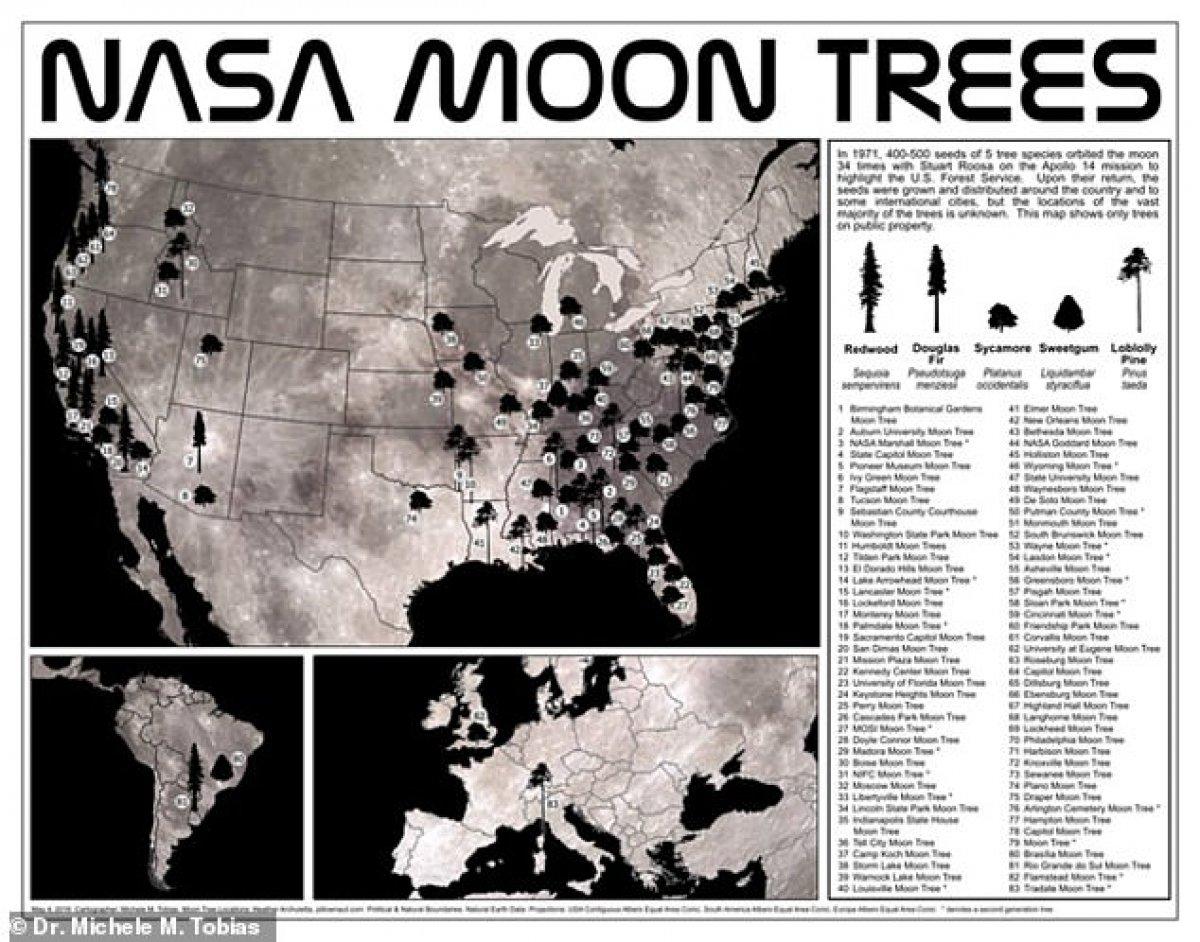 NASA, Ay ağaçlarının haritasını yayınladı
