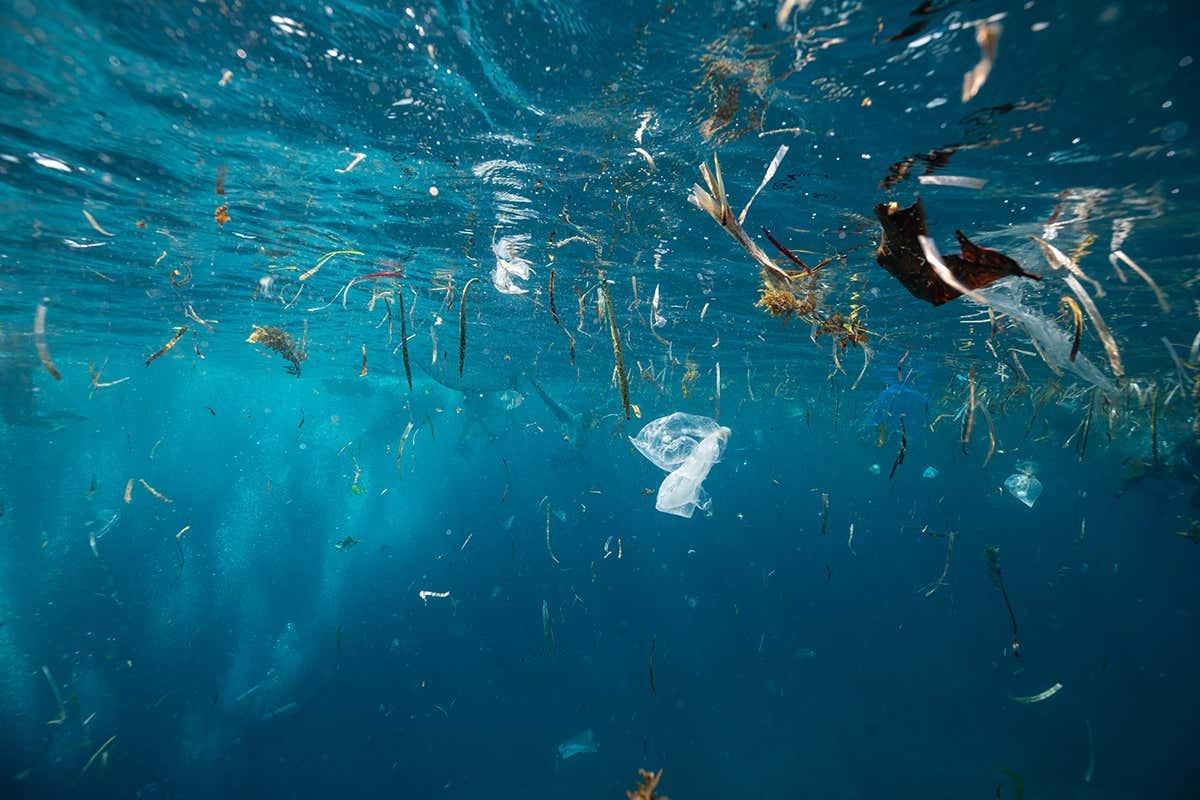 Marmara'da 12, Karadeniz'de 7 balık türünde mikroplastiklere rastlandı