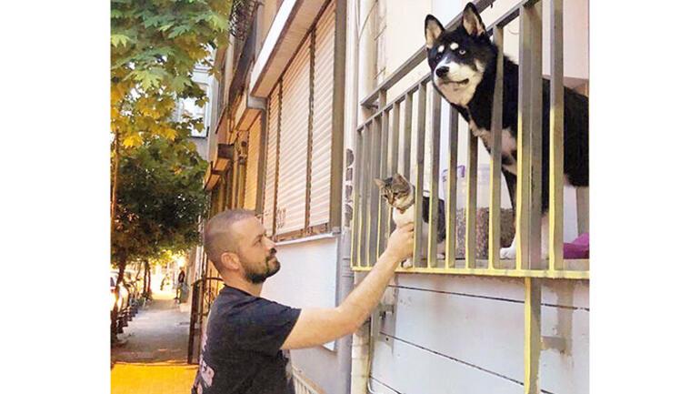 Pandemi sokak köpeklerini kötü etkilemiş!