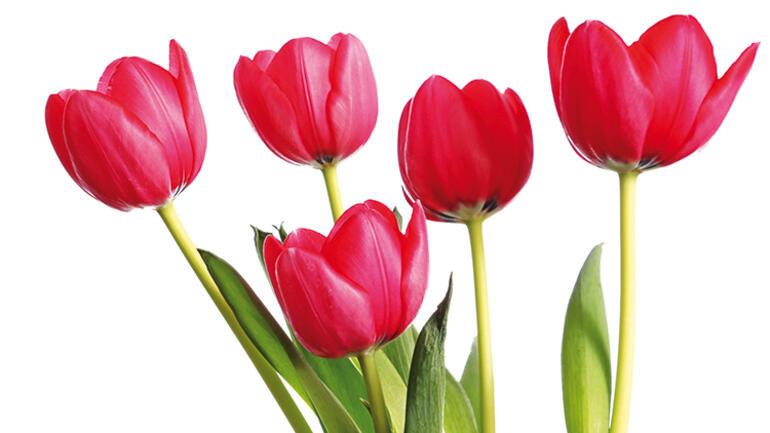 İstanbul bu ay bir çiçek bahçesi!